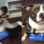 2019 Southeastern Guide Dogs Walkathon